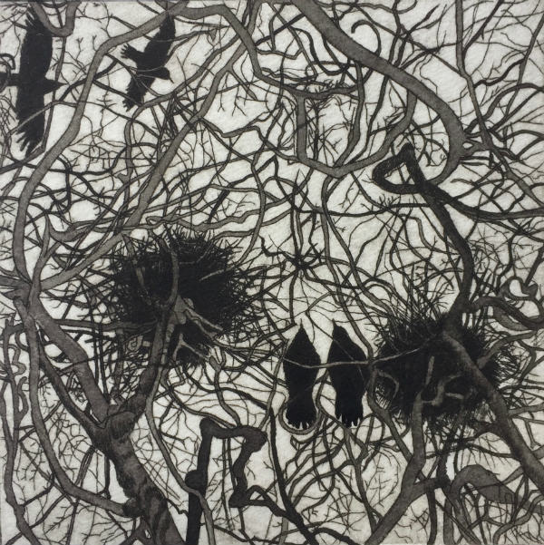 Looking up at Our Rooks, Winter