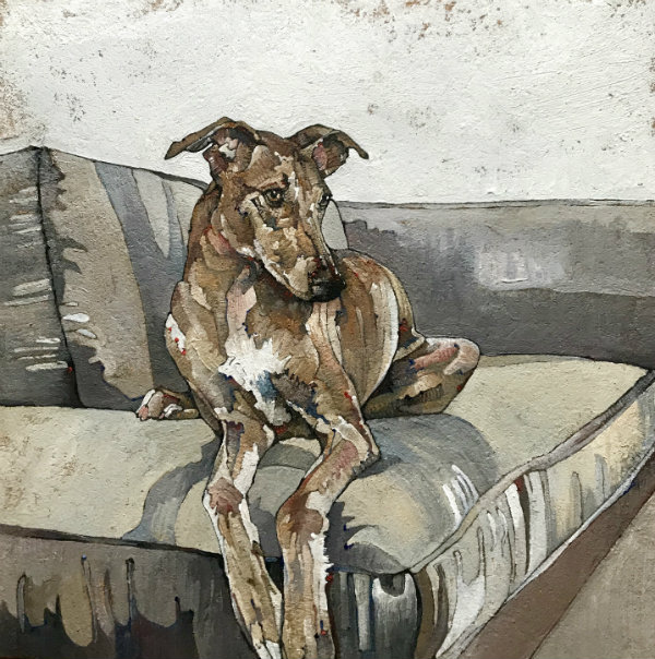 Whippet On Grey Sofa